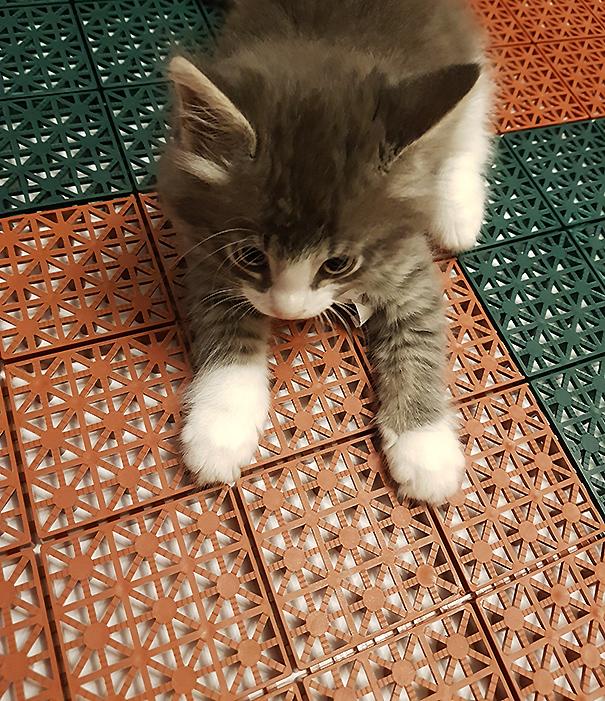 Кот на плитке