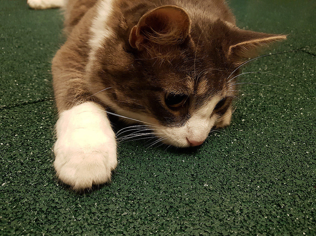 Резиновая плитка понравилась коту